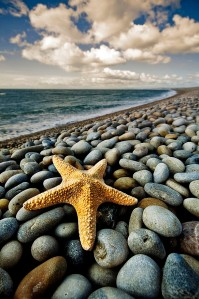 Starfish on seashore
