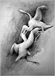 Artist's impression of fossil birds found in Jamaica