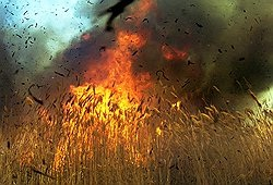Burning wheat fields in Russia