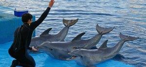 Captive dolphins in holiday hotspots