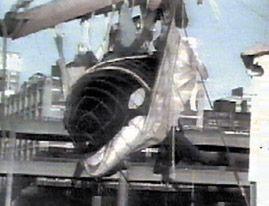An orca taken into captivity