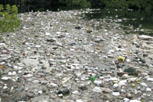 Garbage in Kingston Harbour