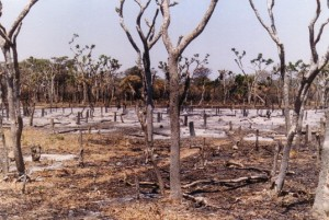 Deforested area in Mozambique