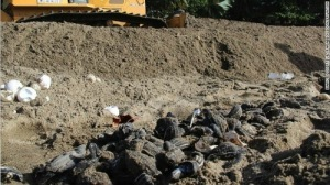 Dead turtles on Trinidad beach