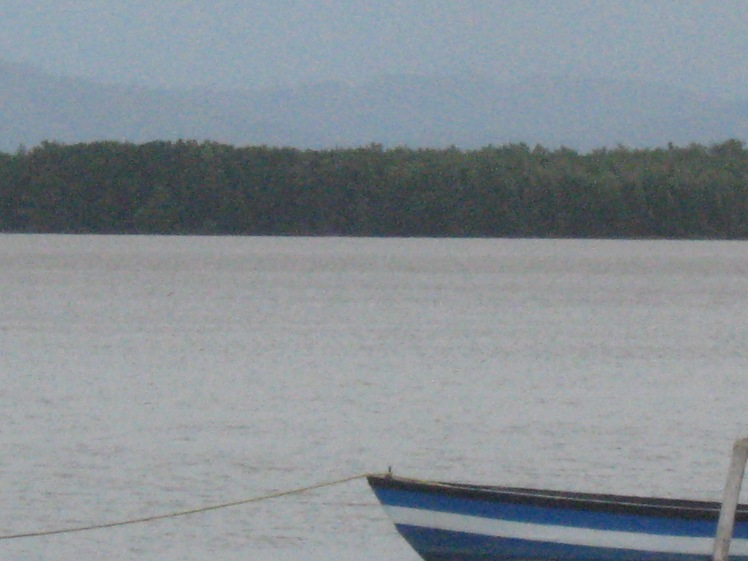 Mangroves at Waterloo, Trinidad (My Photo)