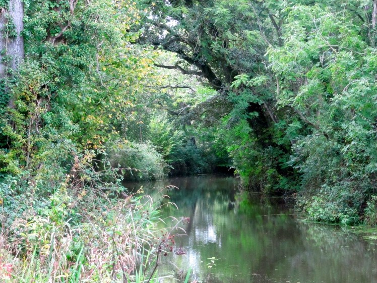 The Wey and Arun Canal near Loxwood, Sussex, UK