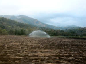 The muted colors of drought in the fields surrounding Trinityville. (My photo)