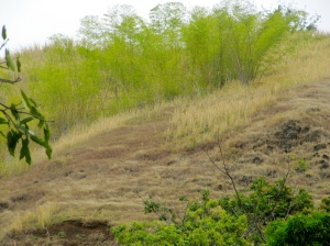 Hillside near check dam in Somerset, St. Thomas. (My Photo)