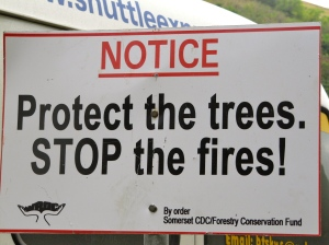 Trees are precious... A sign sponsored by the Women's Resource and Outreach Centre (WROC).