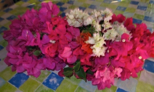 A bunch of our flaming bougainvillea, which loves the sun.