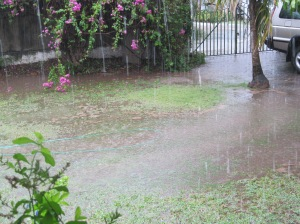 Our worn and weary front lawn, transformed into a wetland...