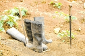 Water boots and machetes which residents say belonged to the two murdered brothers in Rowlandsfield, St. Thomas. (Photo: Lionel Rookwood/Jamaica Observer)