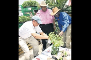 OH, THE HEADGEAR! Minister of Agriculture and Fisheries Roger Clarke (centre) observes as Christopher Levy (left), CEO of Jamaica Broilers Group, and Jamaica Agricultural Society President Senator Norman Grant examine a seedling at yesterday's opening of the 61st Denbigh Agricultural, Industrial and Food Show in Clarendon. (Photo: Norman Thomas/Jamaica Observer)