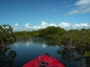 Portland Bight, in southern Jamaica, was designated a Wetland of International Importance on World Wetland Day, February 2, 2006. The Jamaican Government is now seriously considering a demand from Chinese investors to build a transshipment port in the area, which is protected by law and includes recently established fish sanctuaries.  (Photo: Gleaner)