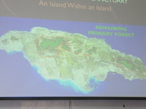 This map shows Jamaica's few remaining areas of primary forest (the bright green areas) including the Cockpit Country in the mid/northwest section of the island - it's the largest area on this map. (My Photo)