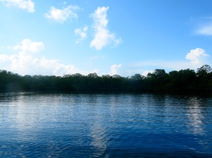 One of the mangrove lagoons in the fish sanctuary on the north side of the Goat Islands. (My photo)