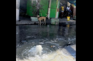 Raw sewage bubbles up on Oxford Street, downtown Kingston. (Photo: Jamaica Observer)