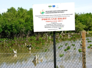 A mangrove replanting project in the Portland Bight Protected Area funded by the European Union.