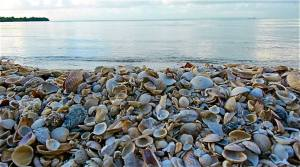 A beach of shells on Great Goat Island.