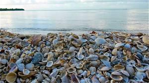 A beach of shells on Great Goat Island.
