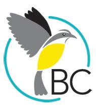 Birds Caribbean (formerly the Society for the Conservation and Study of Caribbean Birds) is among several international entities that have not been accorded the decency of a response to their letters from the Government of Jamaica.