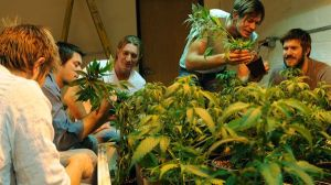 "Josh Stanley and his brothers up to their ears in ganja on the TV show ""American Weed."" It's a family business, it seems. I think he's third left. (Photo: Critically Rated blog)"