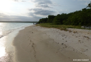 Hawksbill Sea Turtle nesting beach at Manatee Bay in the Portland Bight Protected Area - now threatened by a port development. (Photo: Mike Fouraker)