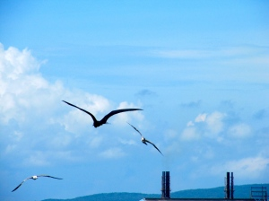 Seabirds, Old Harbour Bay. (My photo)