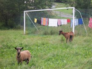The Spanish defense.
