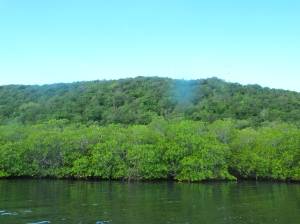 Great Goat Island and the area between the two islands are fringed with thick mangrove forests.