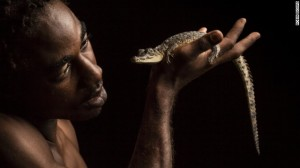 """Kenroy """"Booms"""" Williams holds an Amerrican crocodile, Crocodylus acutus, a Vulnerable species from the Portland Bight Protected Area of Jamaica in the palm of his hand. (Photo: Robin Moore)"""
