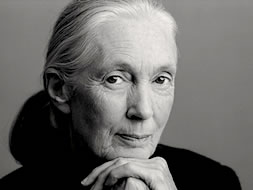 Jane Goodall was ridiculed when she began her work with chimpanzees. Now she is a United Nations Messenger of Peace.