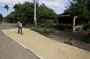 Rodolfo Molina, an 81-year-old retired mechanic, dries rice for storage outside his home where he has lived for 40 years in Rivas, Nicaragua. Rivas is the town where the first phase of an Inter-Oceanic canal is planned to be built in 2014.  (Photo: AP)