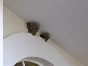 Swifts' nests tucked into the porch.