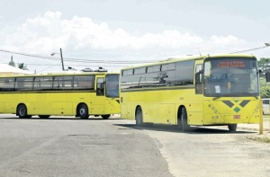 The canary-colored JUTC buses that grace the urban landscape.