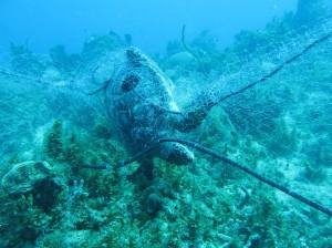 A hawksbill turtle trapped in a fishing net in Negril. (Photo: Jamaica Environment Trust)