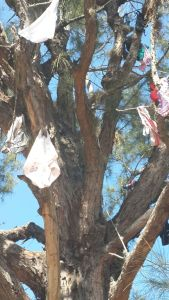 One part of the Panty Tree at Chancellor Hall, a male hall of residence. I understand the students steal girls' underwear and hang it there to humiliate them. There is also a prize at the hall for the resident who has slept with the most women during the academic year. How inspiring! (Photo: Twitter)