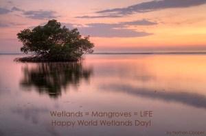 Mangroves at Font Hill, Jamaica. (Photo: Nathan Cooper).