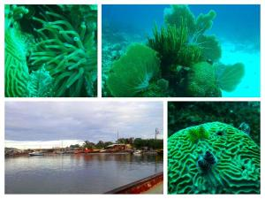 Some examples of the coral seen by the UWI team. (Photo: Twitter)