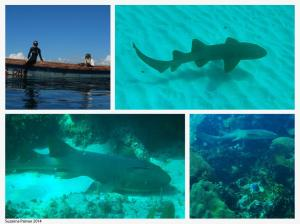 The scientists saw a whole family of nurse sharks (they are harmless by the way) near Tern Cay. (Photo: Twitter)