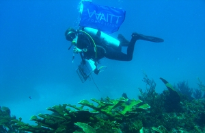 A University of the West Indies scientist doing a bit of advertising for the Waitt Foundation, which funded a recent study of coral reefs in the Portland Bight Protected Area. (Photo: Twitter)