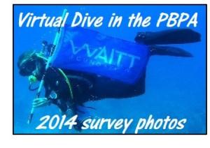 virtual-dive
