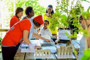 Over 100 lignum vitae seedlings were distributed during St. Martin's Endemic Animal Festival.