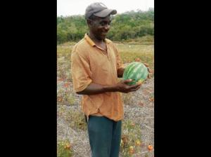 A St. Elizabeth farmer holds a melon that is much smaller than usual, due to last year's drought. (Photo: Launtia Cuff/Gleaner)