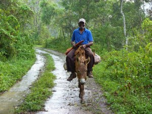 "A farmer coming from his fields (or ""ground"" as they often call it) in Stewart Town. (Photo: Caribbean Birding Trail)"
