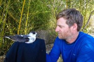 Senior Biologist at EPIC Adam C. Brown with the Black-capped Petrel (Diablotin) in Dominica. (Photo: EPIC)