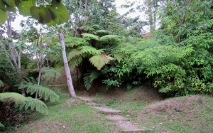 A hiking trail at Holywell in the Blue Mountains. We were there just two weeks ago. (My photo)