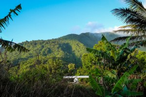 Habitat and radar work on the southern slopes of Morne Diablotin, Dominica. (Photo: EPIC)