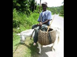 "Farmer Duncan Palmer on his donkey in Pennants, Clarendon, which he describes as ""a blessed thing to me."" (Photo: Christopher Serju/Gleaner)"