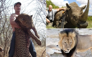 Walter Palmer, photographed with a dead leopard and a dead rhino; and his latest prey, Cecil. (Photo: AP)